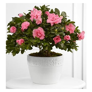 FTD Vibrant Sympathy Planter - Smart Cart